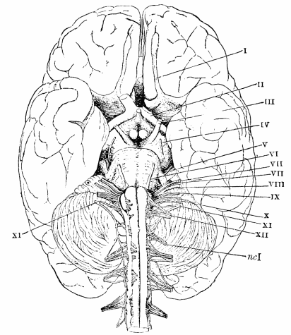 Chapter Viii The Functions Of The Brain In Psychology Briefer